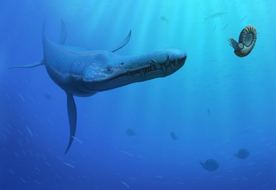 http://dinoart1.narod.ru/liopleurodon.jpg